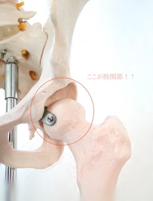 立ち上がる時 股関節 痛い 写真1